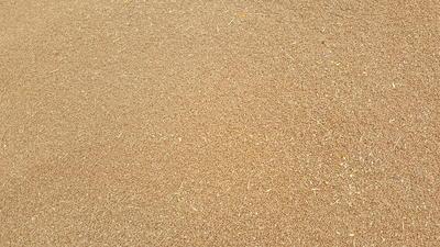 甘肃省庆阳市西峰区混合小麦