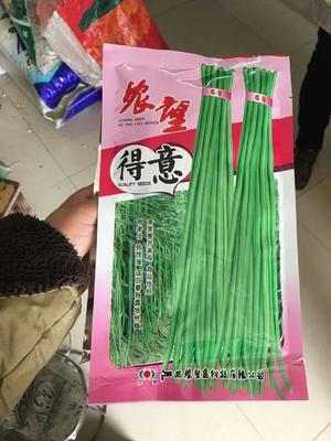 江苏省宿迁市沭阳县豆角种子 ≥85%