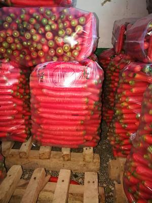 陕西省渭南市大荔县秤杆红萝卜 10~15cm 2两以上 3~4cm