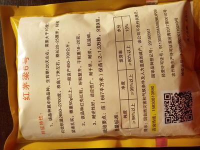 河北省沧州市青县红毛6号 种子