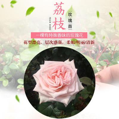 云南省昆明市呈贡区荔枝