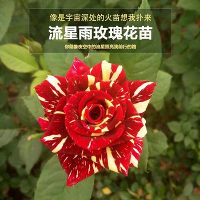 云南省昆明市呈贡区流星雨