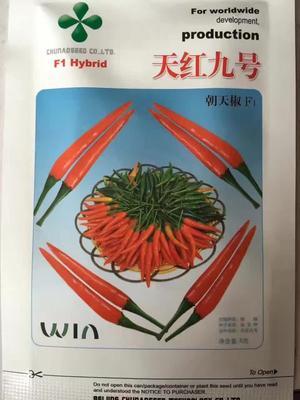 北京朝阳区朝天椒种子 95%以上 杂交种