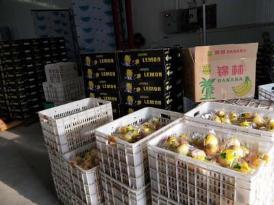 河南省郑州市中牟县安岳柠檬 2 - 2.6两