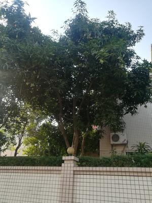 河南省周口市项城市皂角树