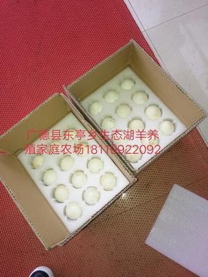 安徽省宣城市广德县土鹅蛋 食用 礼盒装