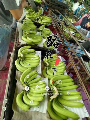云南省西双版纳傣族自治州景洪市西双版纳香蕉 八成熟 50 - 60斤