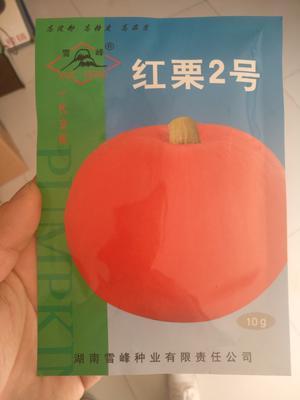 山东省潍坊市寿光市红栗二号 85%