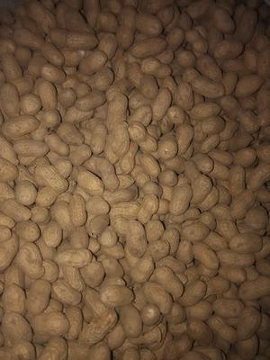这是一张关于白沙系列花生 干货 带壳花生的产品图片