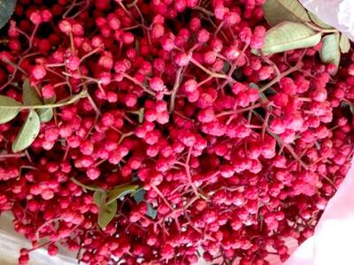 这是一张关于大红袍花椒 鲜花椒 特级的产品图片