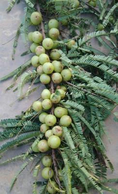 这是一张关于滇橄榄 14g以上的产品图片