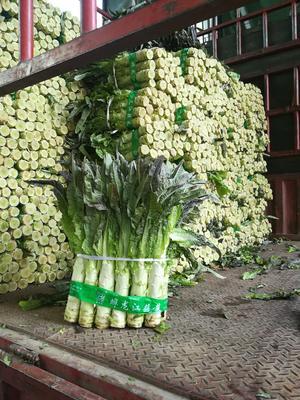 广东省广州市白云区紫叶莴笋 50-60cm 1.5~2.0斤