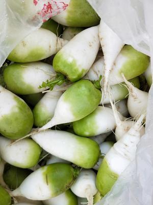 江苏省徐州市新沂市青皮萝卜 0.2~1斤