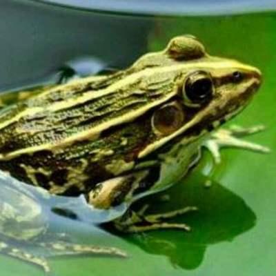 江西省宜春市樟树市青蛙