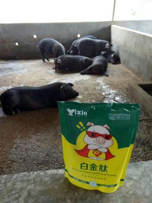 上海闵行区健胃散