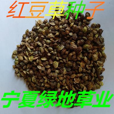 宁夏回族自治区固原市隆德县红豆草种子