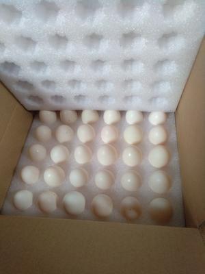 广西壮族自治区桂林市临桂县银羽王鸽子蛋 食用 礼盒装
