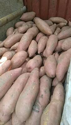 北京丰台区烟薯25 红皮 3两以上