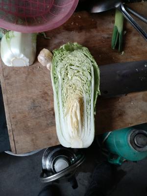 山东省济南市平阴县北京新三号白菜 3~6斤 净菜