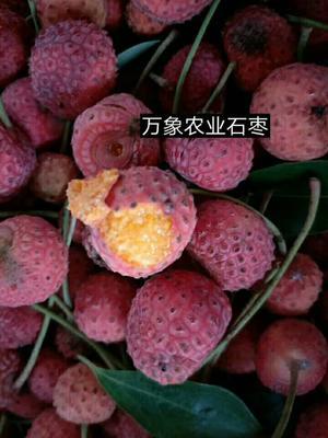 江西省上饶市鄱阳县刺果番荔枝苗
