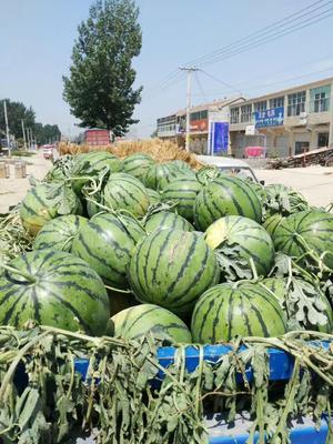 河南省商丘市睢阳区京欣西瓜 有籽 1茬 9成熟 8斤打底