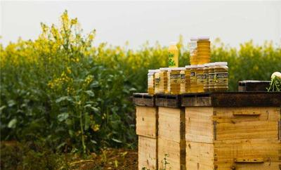 这是一张关于土蜂蜜 盒装 90%以上 2年以上的产品图片