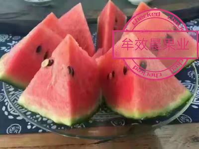 山东省潍坊市寒亭区早春红玉西瓜 有籽 1茬 9成熟 4斤打底