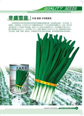 河南省郑州市金水区韭菜种子