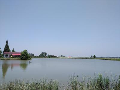 湖南省常德市安乡县池塘草鱼 人工养殖 1.5-6公斤
