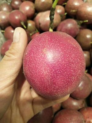 广西壮族自治区玉林市玉州区紫红色百香果 50 - 60克