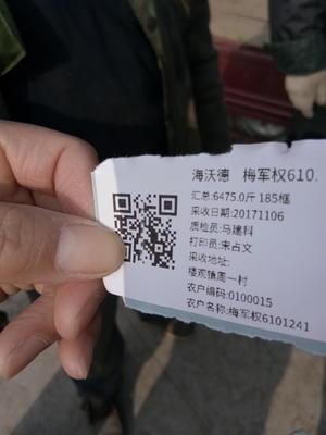 陕西省西安市周至县海沃德猕猴桃 90~100克