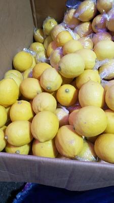 广东省广州市白云区尤力克柠檬 1.6 - 2两