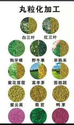 江苏省宿迁市沭阳县苜蓿草种子