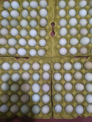 海南省琼海市琼海市土鸡蛋 食用 箱装
