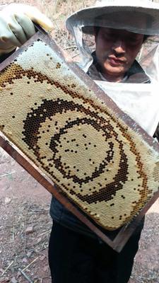 江苏省苏州市相城区土蜂蜜 塑料瓶装 98% 2年
