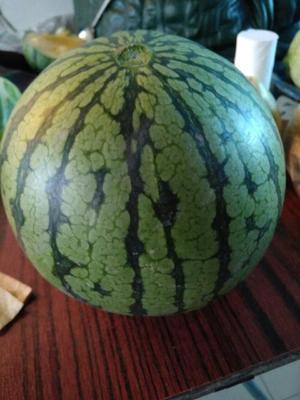 吉林省长春市榆树市特小凤西瓜 有籽 1茬 8成熟 4斤打底