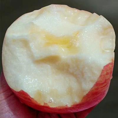 陕西省延安市宜川县红富士苹果 纸+膜袋 表光 85mm以上