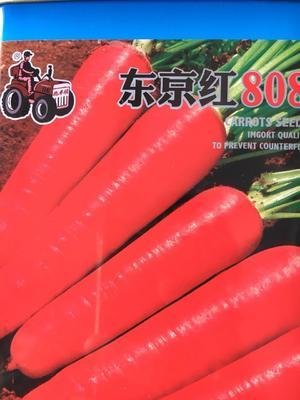 江苏省宿迁市沭阳县三红胡萝卜种子