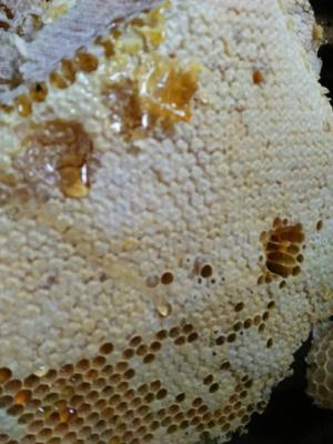四川省泸州市古蔺县土蜂蜜 塑料瓶装 98% 2年以上
