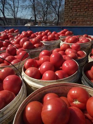 这是一张关于硬粉番茄 打冷 硬粉 弧二以上的产品图片