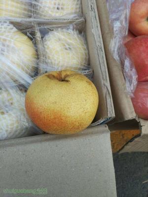 内蒙古自治区巴彦淖尔市杭锦后旗苹果梨 3-6g 55mm以上