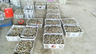 广西壮族自治区柳州市柳北区土鹌鹑蛋 食用 箱装