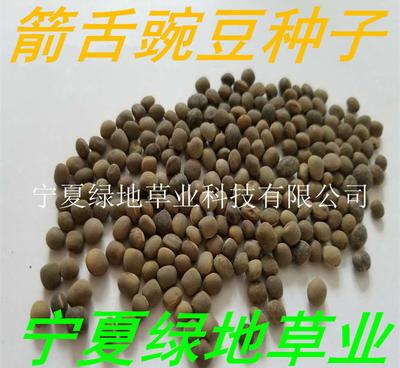 宁夏回族自治区固原市隆德县箭舌豌豆种子 5-7cm 饱满