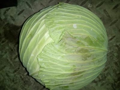 河南省南阳市新野县扁球甘蓝 4~5斤