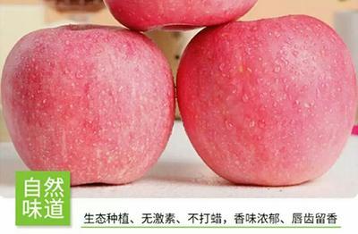这是一张关于红富士苹果 纸+膜袋 片红 75mm以上的产品图片