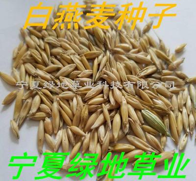 宁夏回族自治区固原市隆德县燕麦种子