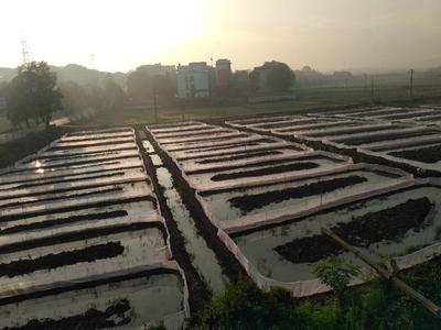 湖南省永州市零陵区黑斑蛙