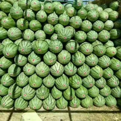 辽宁省沈阳市新民市甜王西瓜 有籽 1茬 8成熟 6斤打底