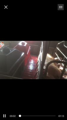 湖北省襄阳市枣阳市长白猪 160-200斤