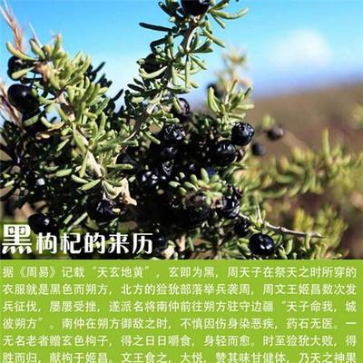 青海省西宁市城东区黑枸杞 一级